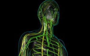 Układ limfatyczny – rewizyta